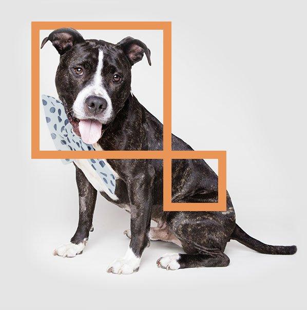 home_animals_dog